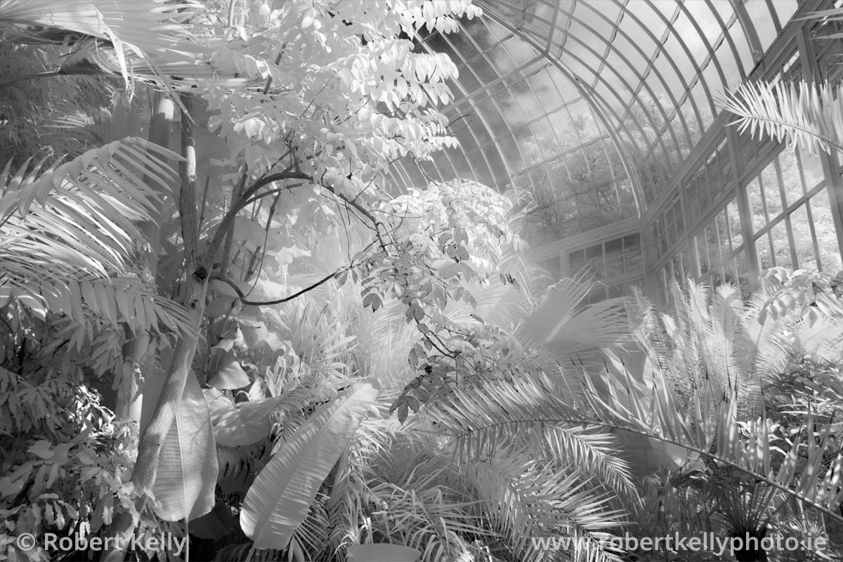 The interior of the Great Palm House, Glasnevin, Dublin