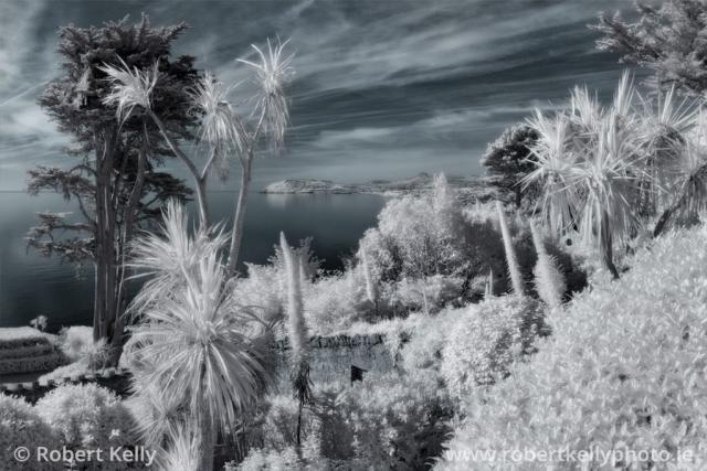 Infrared image of a tropical garden overlooking Killiney Bay, Ireland
