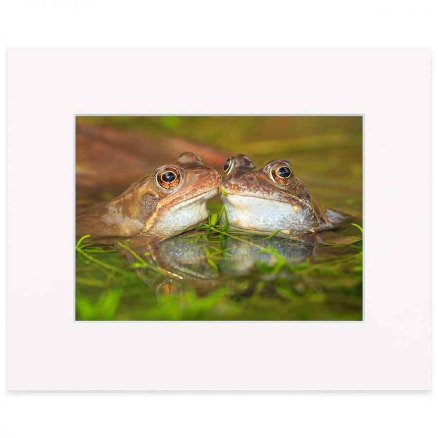 Two frogs in a pond