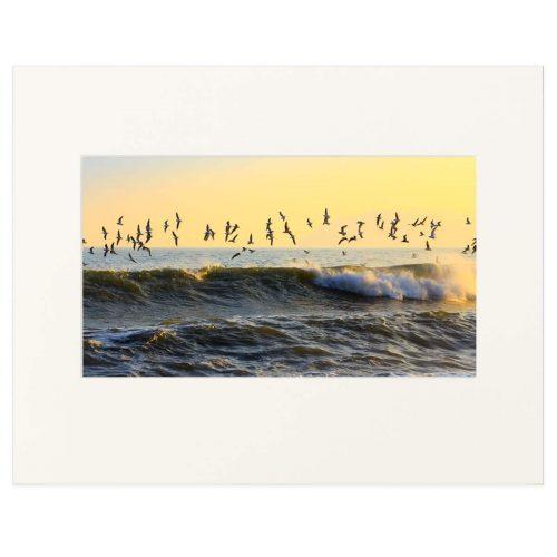 Gulls over Whiterock Beach, Killiney Bay. Fine art print 11 x 14 inches