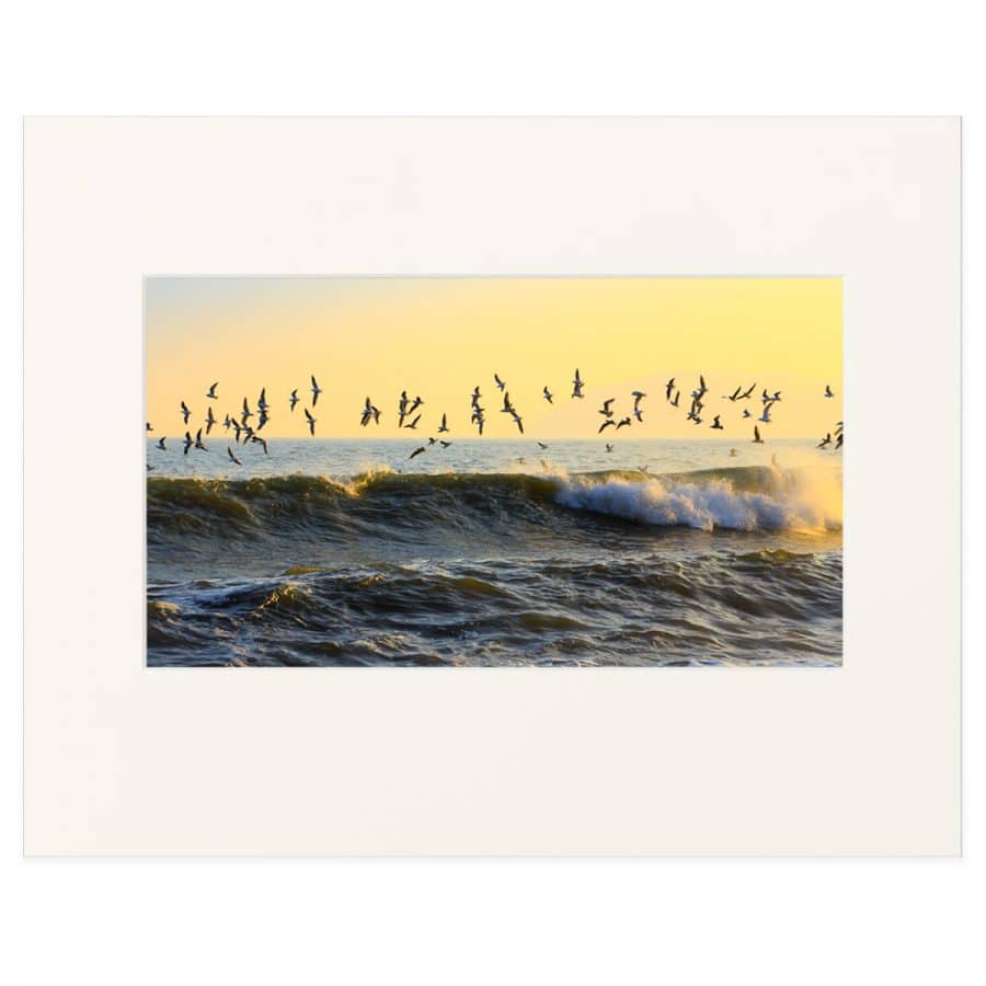 Gulls over Whiterock Beach, Killiney Bay. Fine art print 11 x 14 inches