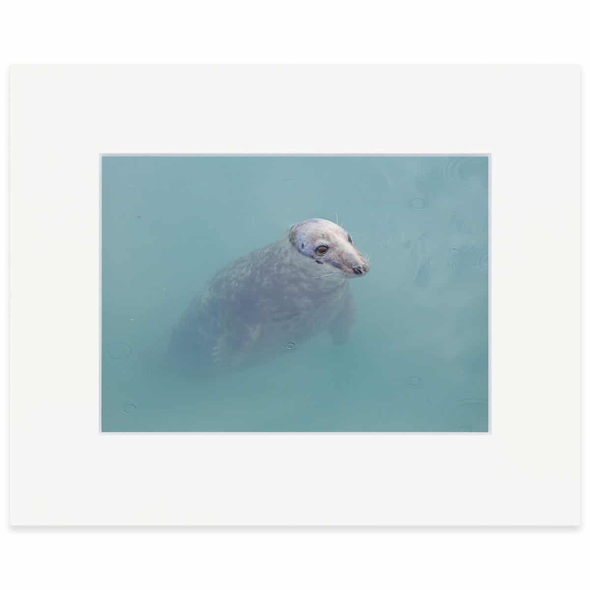 "Grey Seal print 8"" x 10"""