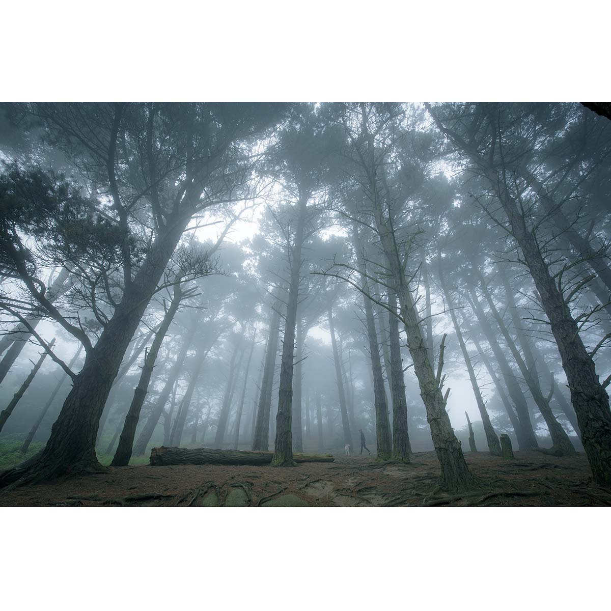 Dalkey Hill in the mist © Robert Kelly